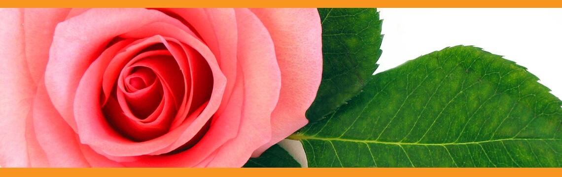 Demeter - Everyoung Professzionális Rózsa Arc- és Dekoltázs Kezelés